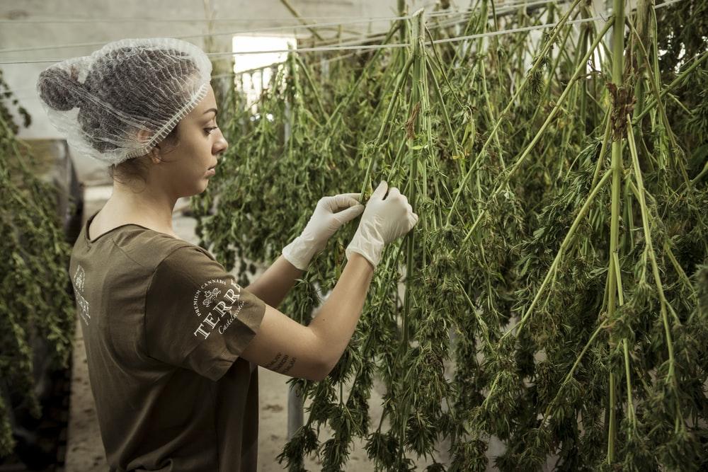 Invertir en cannabis desde España